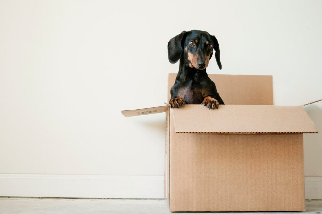 Pets while moving out